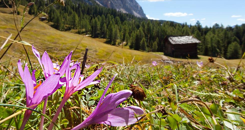 Le baite dell alta badia la cucina tipica ladina ad alta for Le piu belle baite in montagna